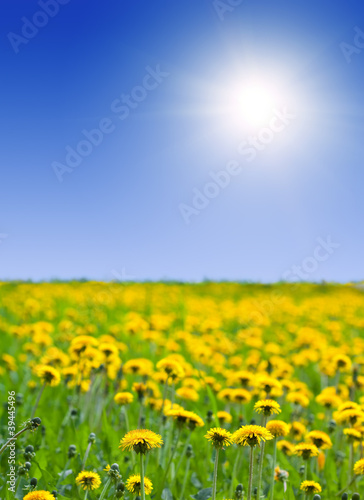 Summer landscape with dandelions