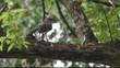 Brid on tree singing