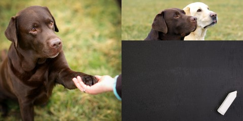 Hundeschule, Tafel