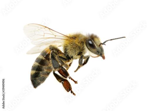 Fototapete Insekten - Würmer -  Biene -  Marienkäfer - Schmetterling - Spinnen - Schabe - Poster - Aufkleber