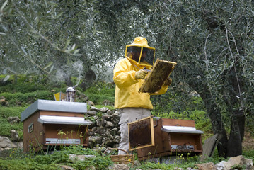 Beekeeper inspects honey combs