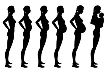 Stages of pregnancy of the woman
