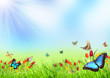 Beautiful spring meadow with butterflies