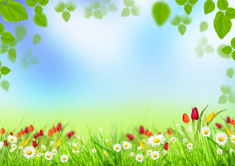 Beautiful spring background with blooming flowers in grass