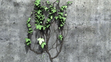 Ivy Growth Footage With Alpha Channel
