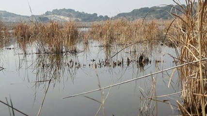 Cullera Valencia España- Laguna San Lorenzo