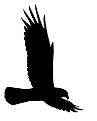 Silhouette of flying eagle isolated