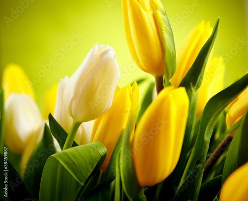 Żółte i białe kwiaty z zielonym przestrzeni kopii