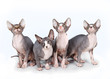Four kittens on white background