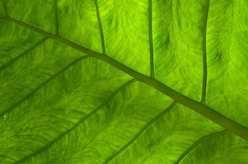 grünes Blatt 2