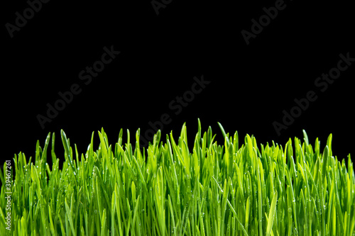 Foto op Plexiglas Landschappen Grass on a black background