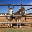 2 little donkeys