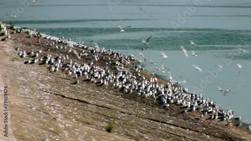 Gulls on the stone coast