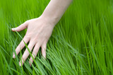 green grass and female hand