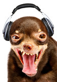 Fototapety Ridiculous dog DJ.