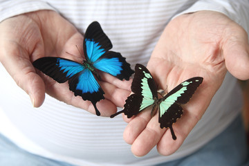 two swallowtail butterflies on a man's hands
