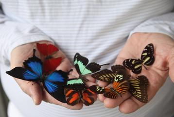 an assortment of butterflies on a man's hands