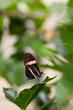Little Contrasty Butterfly