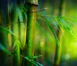 Fototapeten,bambus,blatt,blatt,urwald
