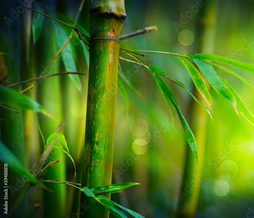 Foto op Canvas Bamboe Bamboo