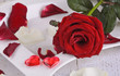 Romantik place setting with red roses and rose petals for lovers