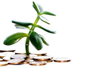 деньги и растение