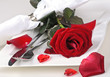 Romantic place setting with red rose for lovers