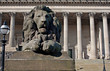 Lion statue in front of St Georges Hall, Liverpool, UK