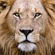 The Lion - 39514675