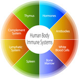 Human Body Immune Systems Chart poster