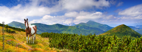 Panorama of the summer landscape in the mountains with horse