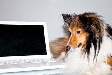 Informatica dog