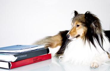 dog e livros