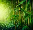 Fototapeten,bambus,wald,gärten,gartenarbeit