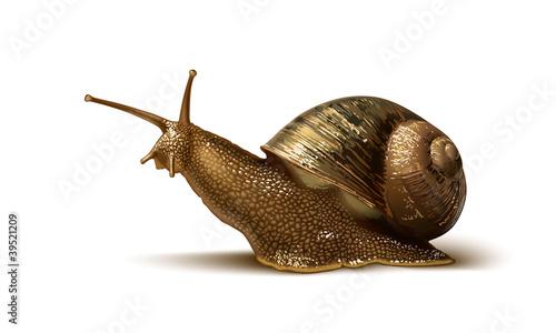 illustration of a snail - 39521209