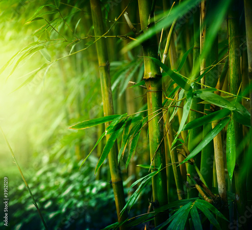 Foto op Canvas Hong-Kong Bamboo