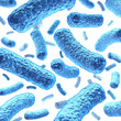 Bacterium and Bacteria