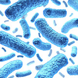 Bacterium and Bacteria poster