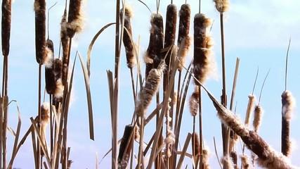 reed wind