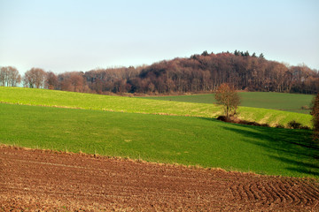 landscape with fields