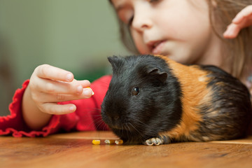 Girl and guinea pig
