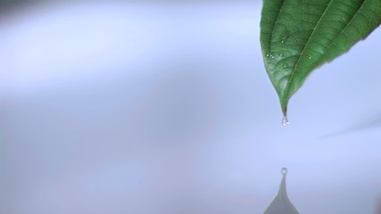 Drop on a leaf in super slow motion