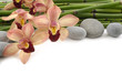 pink orchid with stones and thin bamboo grove