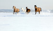 Fototapeten,tier,pferd,herde,winter