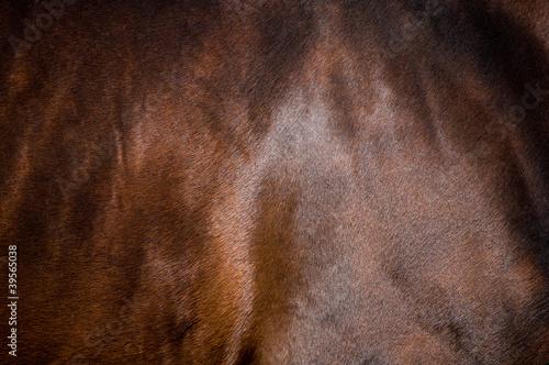 Skin of bay horse