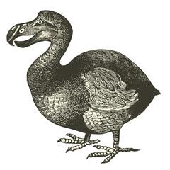 Dodo (Didus ineptus)