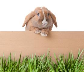 little bunny with cardboard