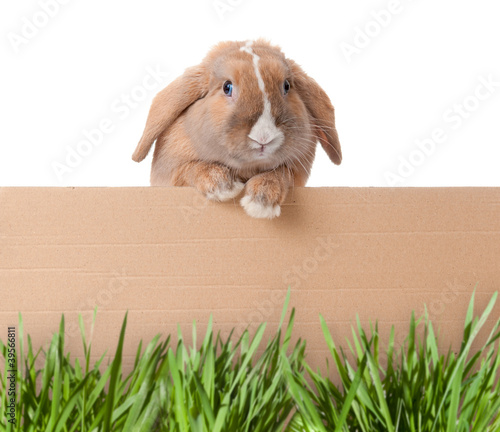 little bunny with cardboard