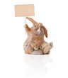little bunny with sign - 39571224