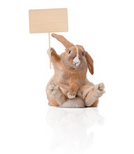 """Постер, картина, фотообои """"little bunny with sign"""""""